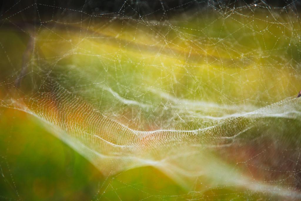 Inside the Web