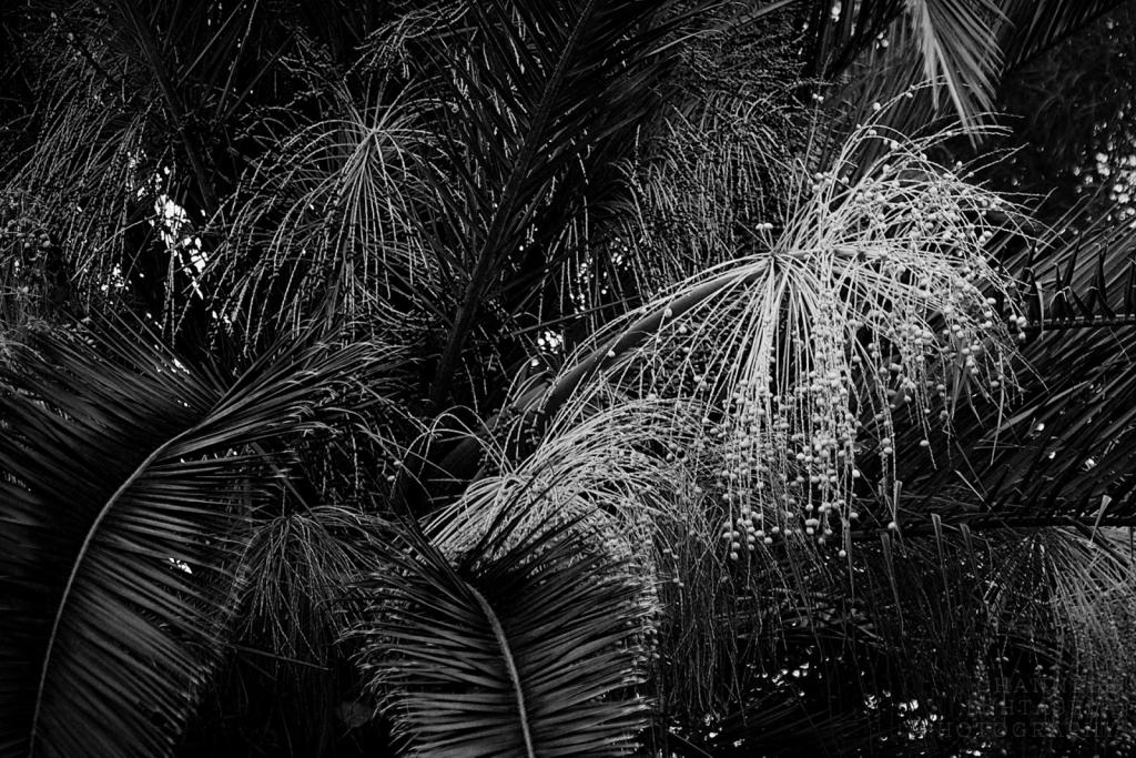 Palmscape